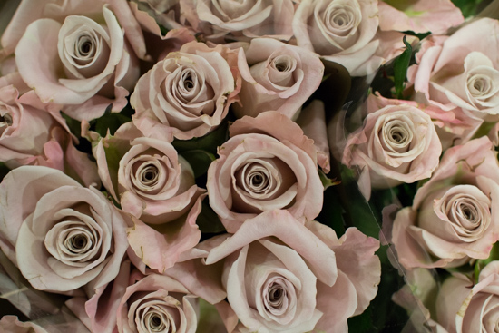 Menta-Blush-Roses-at-New-Covent-Garden-Flower-Market-April-2016
