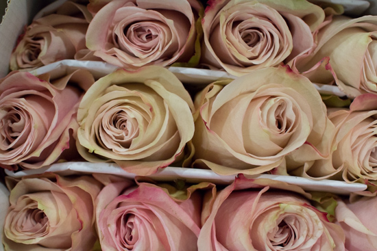Secret-Garden-Blush-Roses-at-New-Covent-Garden-Flower-Market-April-2016