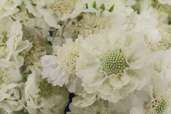 White Scabiosa caucasica Annabelle at New Covent Garden Flower Market August 2016