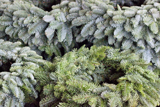 Blue Spruce wreaths at New Covent Garden Flower Market - Christmas 2013