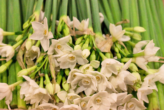 Paper whites at New Covent Garden Flower Market - Christmas 2013