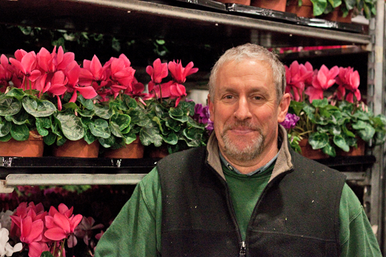 New Covent Garden Flower Market - Product Profile - Christmas Plants - Paul at Evergreen