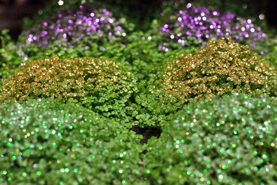New Covent Garden Flower Market - Product Profile - Christmas Plants - Soleirolia soleirolii