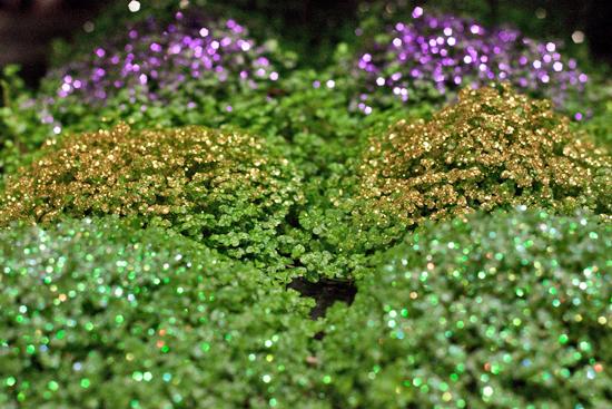 New Covent Garden Flower Market - Product Profile - Christmas Plants - Soleirolia soleirolii