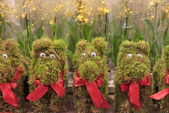 New Covent Garden Flower Market - Product Profile - Christmas Plants - Mossy Dogs