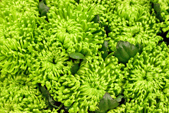 New Covent Garden Flower Market - Chrysanthemum