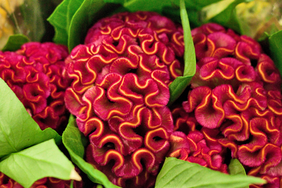 Celosia at New Covent Garden Flower Market