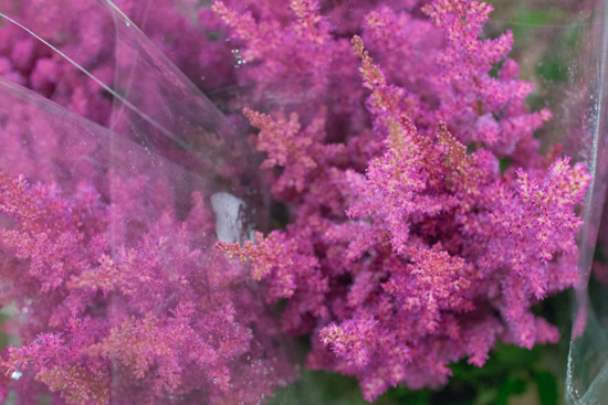 Cerise Elisabeth van Veen Astilbe at New Covent Garden Flower Market July 2016