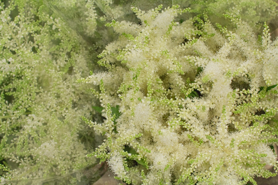 White Astilbe Washington at New Covent Garden Flower Market July 2016