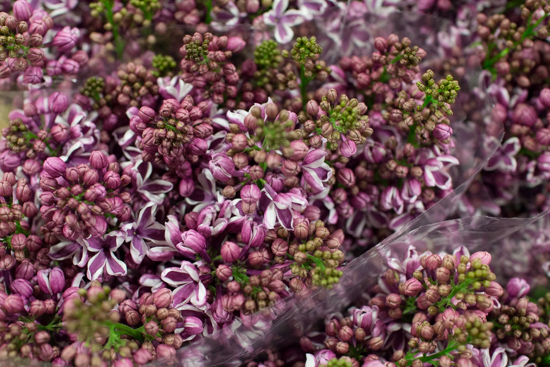 Lilac Sensation at New Covent Garden Flower Market - March 2016