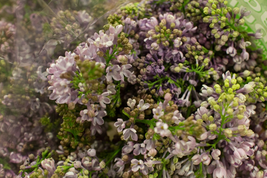 Hugo Koster Lilac at New Covent Garden Flower Market - March 2016