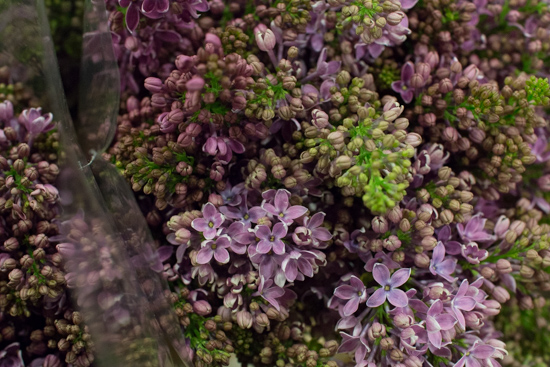 Ruhm von Horstenstein Lilac at New Covent Garden Flower Market - March 2016