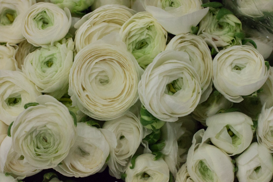 White ranunculus at New Covent Garden Flower Market - Christmas 2015