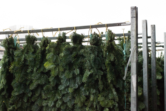 Green pine garlands at New Covent Garden Flower Market - Christmas 2015