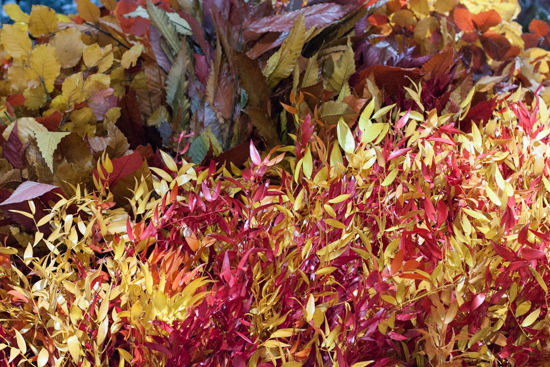 Preserved ruscus,chestnut, beech, maple, eucalyptus, salal, pitosporum ... Autumn Foliage at New Covent Garden Flower Market - October 2015