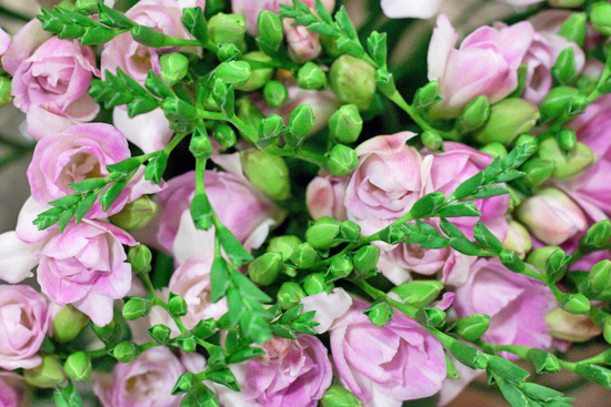 pale purple honeymoon double variety freesia at New Covent Garden Flower Market - August 2014