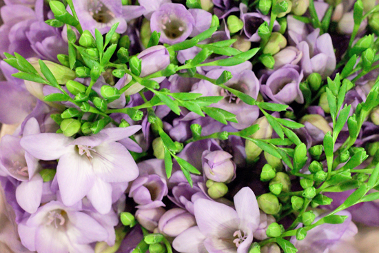 Pale purple Delta River single variety freesia at New Covent Garden Flower Market - August 2014