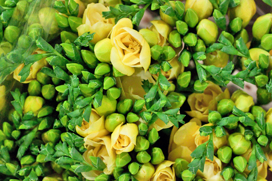Yellow Grandeur double variety freesia at New Covent Garden Flower Market - August 2014