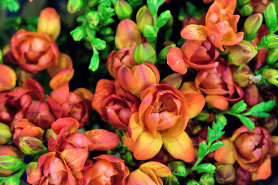 Orange/ red Mandarine double variety freesia at New Covent Garden Flower Market - August 2014