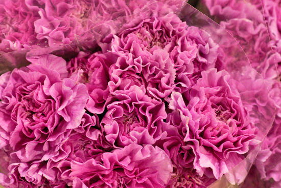 Pink Farida carnations at New Covent Garden Flower Market