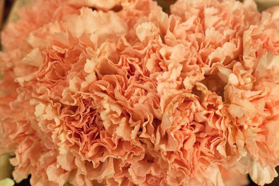 Pale peach Colombian carnations at New Covent Garden Flower Market