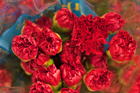 Red Colombian carnations at New Covent Garden Flower Market