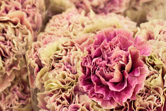 Pink Antique carnations at New Covent Garden Flower Market