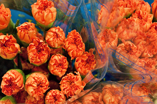 Orange Colombian carnations at New Covent Garden Flower Market