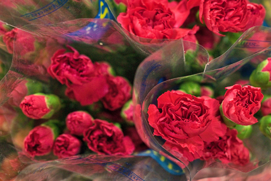 Red/Pink spray carnations at New Covent Garden Flower Market