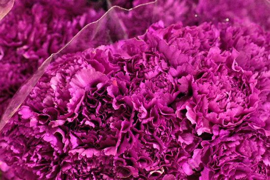 Purple Vogue carnations at New Covent Garden Flower Market