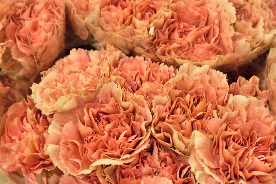 Caramel carnations at New Covent Garden Flower Market