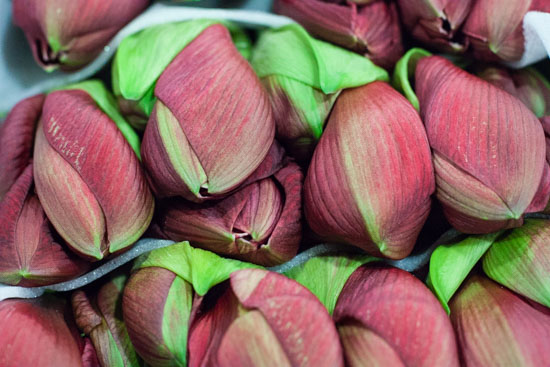 Pink lilac favourite amaryllis at New Covent Garden Flower Market - December 2014