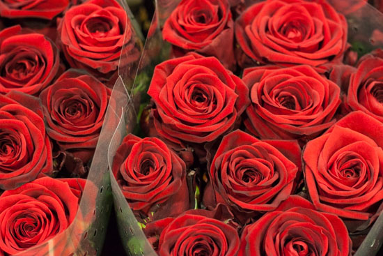 Red Naomi Rose at New Covent Garden Flower Market - February 2015