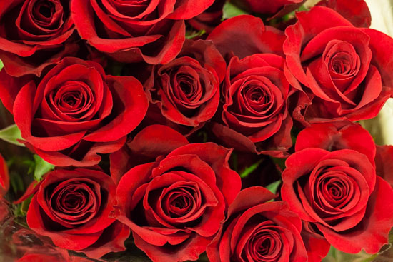 Freedon Red Rose at New Covent Garden Flower Market - February 2015