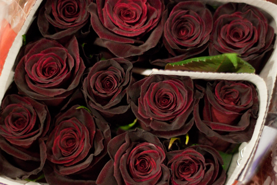Black Baccara dark red Rose at New Covent Garden Flower Market - February 2015