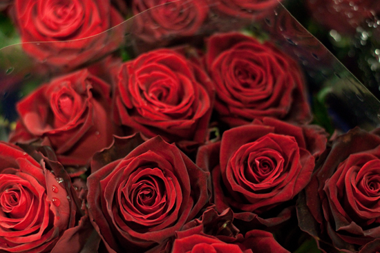 Red Desire Rose at New Covent Garden Flower Market - February 2015