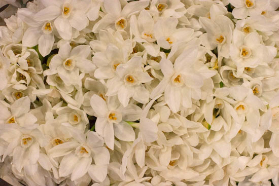 Paper White narcissi at New Covent Garden Flower Market - January 2015