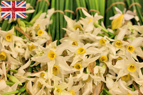 British Scilly White Narcissi at New Covent Garden Flower Market - January 2015