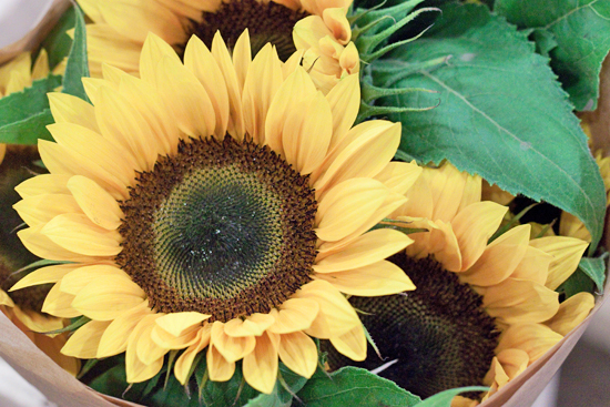 Sunrich Sunflower at New Covent Garden Flower Market