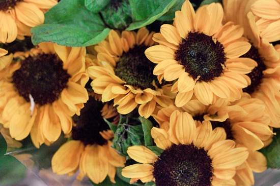 Sonja Sunflower at New Covent Garden Flower Market