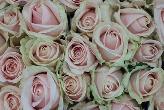 Sweet Avalanche pink roses at New Covent Garden Flower Market - August 2015