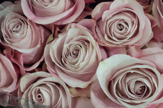 Secret Garden roses at New Covent Garden Flower Market - August 2015