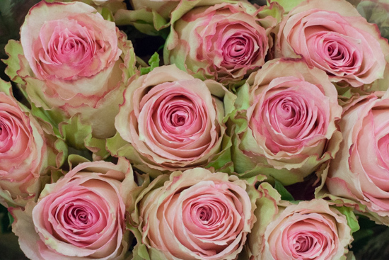 Esperance roses at New Covent Garden Flower Market - August 2015