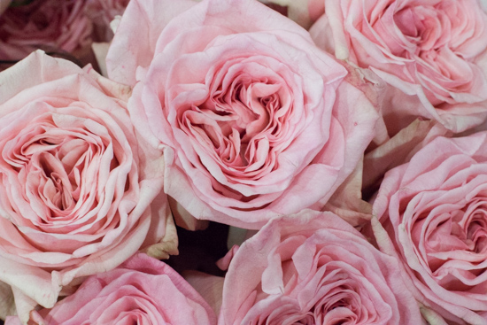 Pink O'Hara roses at New Covent Garden Flower Market - August 2015