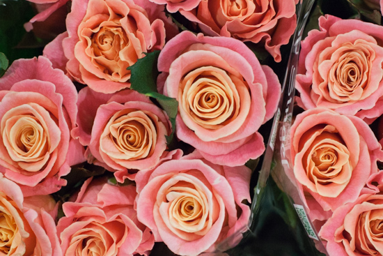Miss Piggy roses at New Covent Garden Flower Market - August 2015