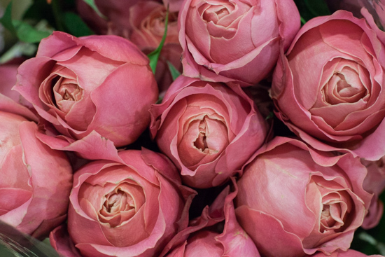 Romantic Antike roses at New Covent Garden Flower Market - August 2015
