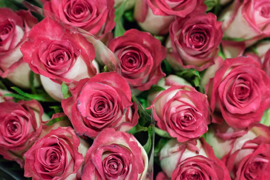 Double Date roses at New Covent Garden Flower Market - August 2015