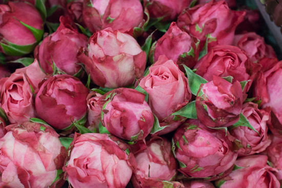 King Arthur roses at New Covent Garden Flower Market - August 2015