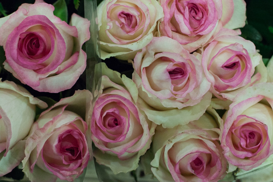 Dolce Vita roses at New Covent Garden Flower Market - August 2015