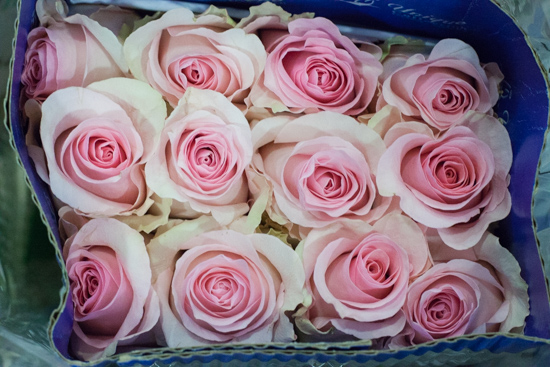 Nena roses at New Covent Garden Flower Market - August 2015